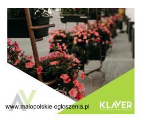 Kwiaty doniczkowe, tropikalne – Holandia – atrakcyjne warunki
